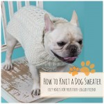 how-to-knit-a-dog-sweater-blog-feat-img