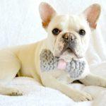 Knit Bow Tie Dog Collar